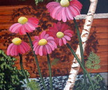 """""""Painted"""" Daisies"""