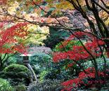 Japanese Garden in Fall, Oregon