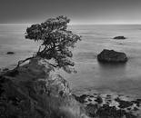Worthy Cypress