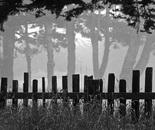 Fog Lines
