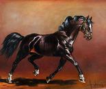 An irrepressible stallion