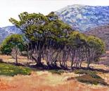 Eucalyotus Grove Catalina