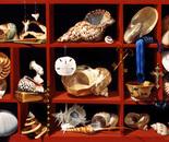 Seashell Cabinet