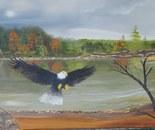 An Eagles Freedom