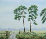 three pine trees 619
