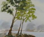 riverside landscape 674