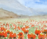 red poppies landscape 695