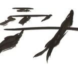 Koi 05