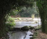 Japanese garden 9