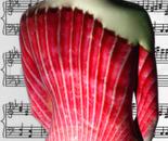 FANFARE SYMPHANY - [Seashell]