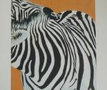 Zebrahug