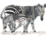 Zebra with calf