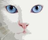 il gatto Elbo