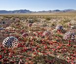Desert Fungi