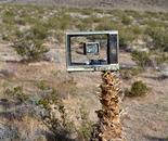 TVs grow on trees in the Mojave Desert