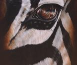 Zebra Eye I