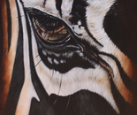 Zebra Eye II