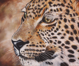 Leopard's Gaze