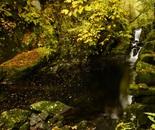 bridal creek in autumn