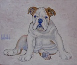 BULLDOG SERIES I