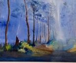 LANDES FOREST.FRANCE