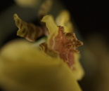 a horny flower