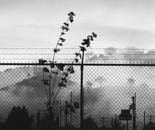 Photograph: Smoke and Fog