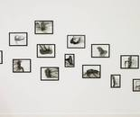 drawnings