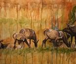 CMR Elk