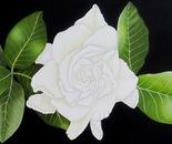 A Gardenia Flower