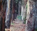 Eucalyptus Alley 4'X6'