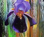 DIVINE IRIS FLOWERS