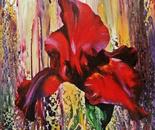 DIVINE IRIS FLOWERS 1