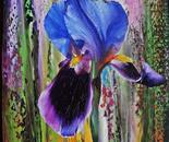 DIVINE IRIS FLOWERS 2