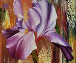 DIVINE IRIS FLOWERS 5