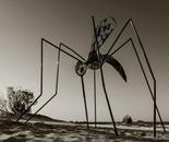 Mosquito(mozzy), Metal, 2006
