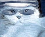 Cat. James Cat