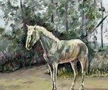 A White Stallion