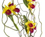 ORCHIDS WITH STICKS