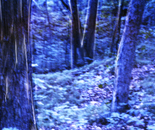 'Midnight Forest' -a panoramic photograph