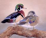 Wood Duck Mates