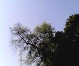 Branches Protruding in Sky