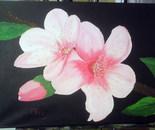 cherry blossom branch of