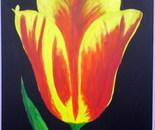 My red tulip