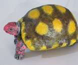 JABUTI. RED FOOTED TORTOISE