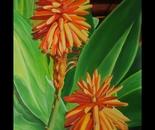 Aloe in Full Bloom
