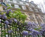 wisteria combing buiding