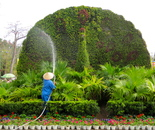 spraying water in Chinese garden