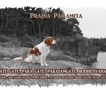 Prajñaparamita