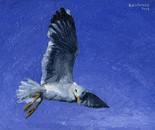 39. Gull following the worshippers: Oil on canvass board 18x24 cm